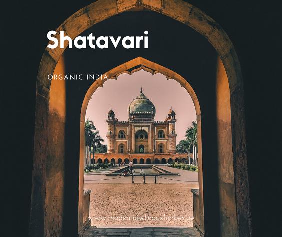 Le shatavari – La plante des femmes