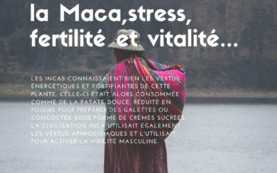 La Maca, stress, fertilité et vitalité…