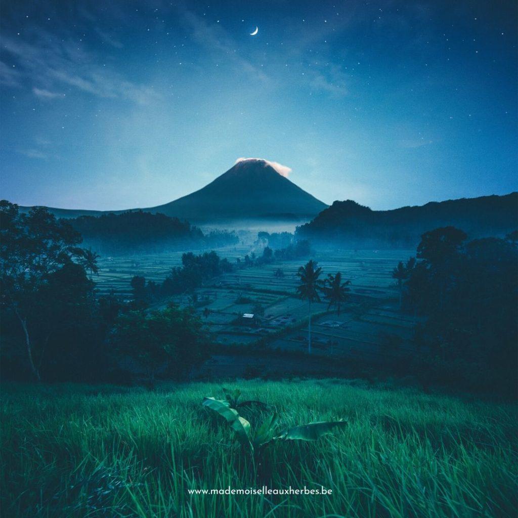 Patchouli Indonésie